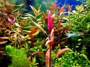 Удобрения( микро,  макро,  калий,  железо ) для аквариумных растений.
