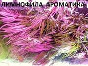 Лимнофила ароматика --- аквариумное растение и разные растения....