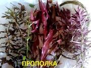 Аквариумные растения,  комплекты простых растений -- для запуска акваса
