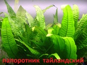 Папоротник тайландский и др. растения -- НАБОРЫ растений для запуска