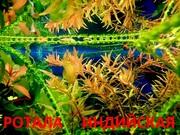 Ротала и др. растения. НАБОРЫ растений для запуска акваса. ПОЧТОЙ и МА