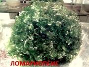 Мох ломариопсис ---- аквариумное растение и другие растения